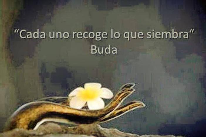 ob_c091aa_la-vache-rose-buda-1